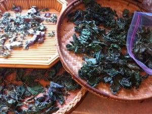 Wild Nettles Harvest Tips